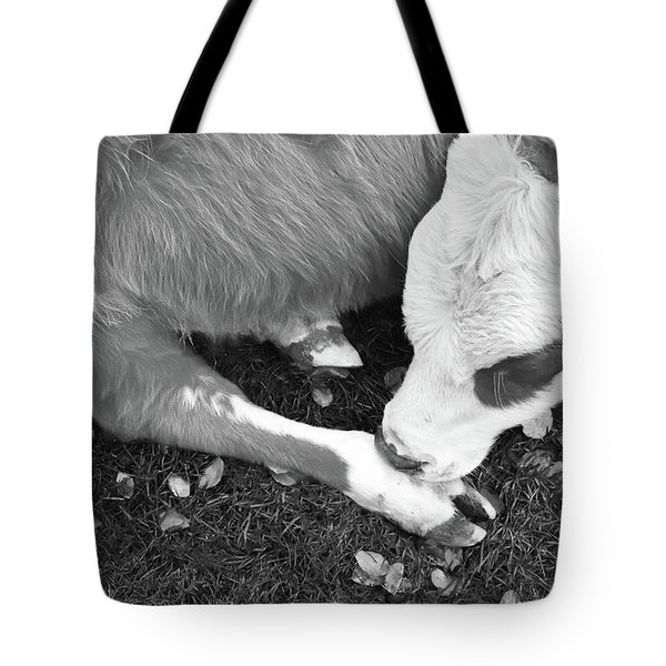 Sleeping Calf Bw Tote Bag
