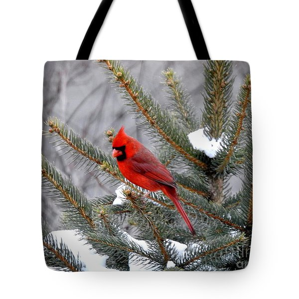 Tote Bag featuring the photograph Sleeping Cardinal by Brenda Bostic