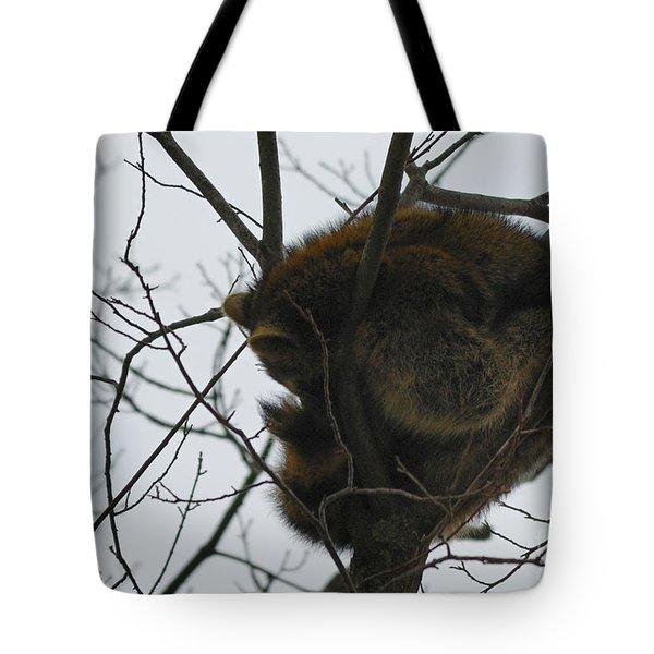 Sleeping Coon Tote Bag
