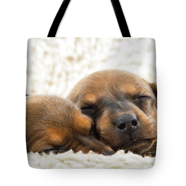 Tote Bag featuring the photograph Sleeping Dachshund Puppies by SR Green