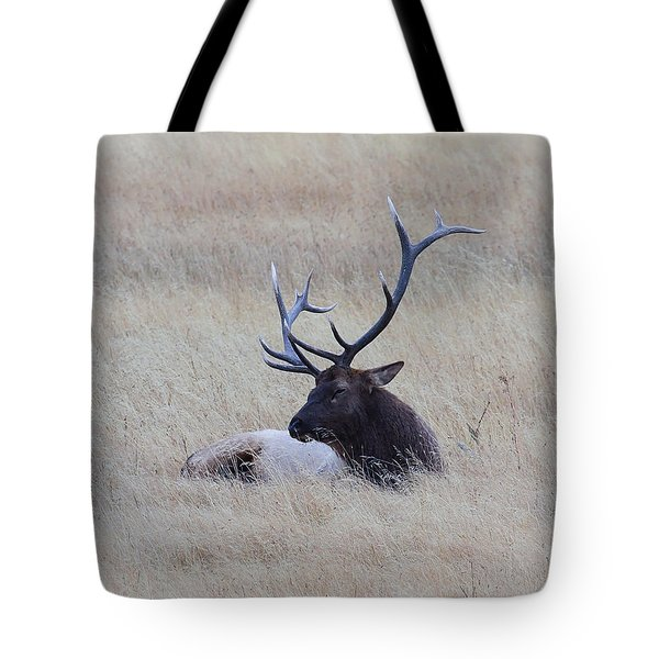 Tote Bag featuring the photograph Sleeping Giant by Steve McKinzie