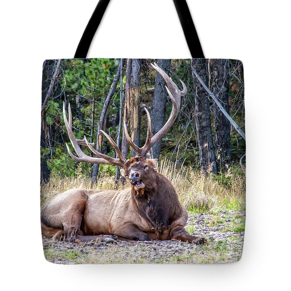 Tote Bag featuring the photograph Sleepy Elk 2009 01 by Jim Dollar
