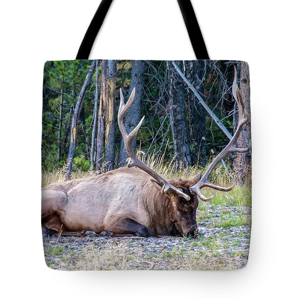 Tote Bag featuring the photograph Sleepy Elk 2009 02 by Jim Dollar