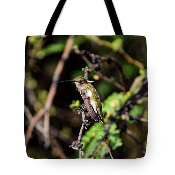 Sleepy Hummingbird Tote Bag