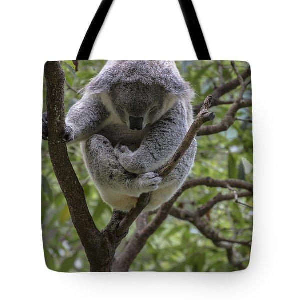 Sleepy Koala Tote Bag by Sheila Smart Fine Art Photography