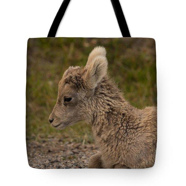 Sleepy Little Lamb Tote Bag by John Roberts