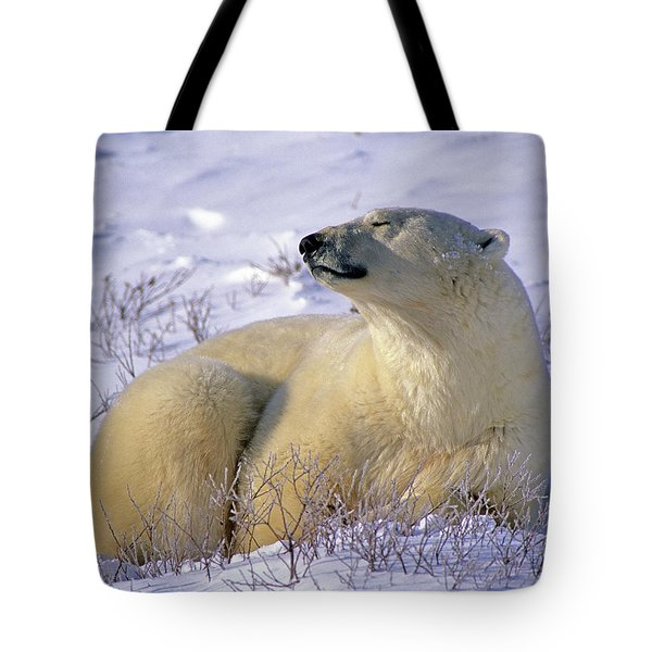 Sleepy Polar Bear Tote Bag by Tony Beck