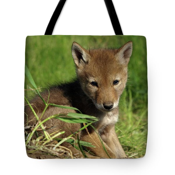Tote Bag featuring the photograph Sleepy Pup by James Peterson