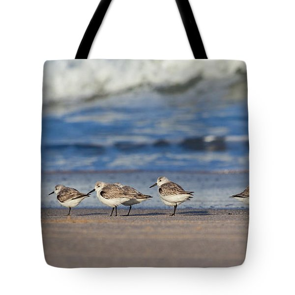 Tote Bag featuring the photograph Sleepy Shorebirds by Michelle Wiarda