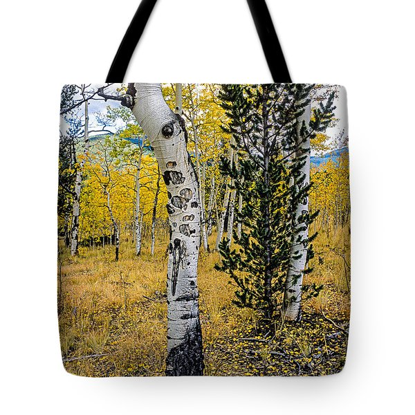 Slightly Crooked Aspen Tree In Fall Colors, Colorado Tote Bag by John Brink