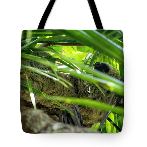 Tote Bag featuring the photograph Sloth Life by David Morefield