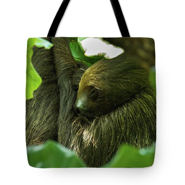 Sloth Sleeping Tote Bag