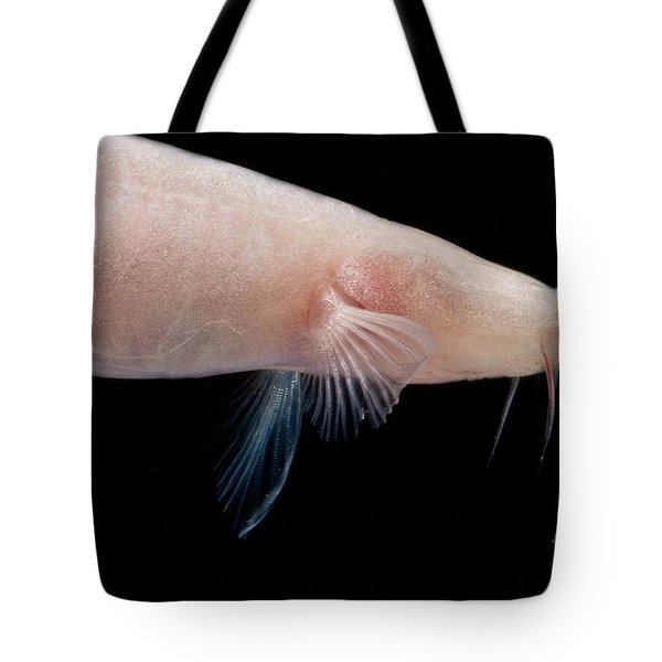Small Headed Cave Loach Tote Bag