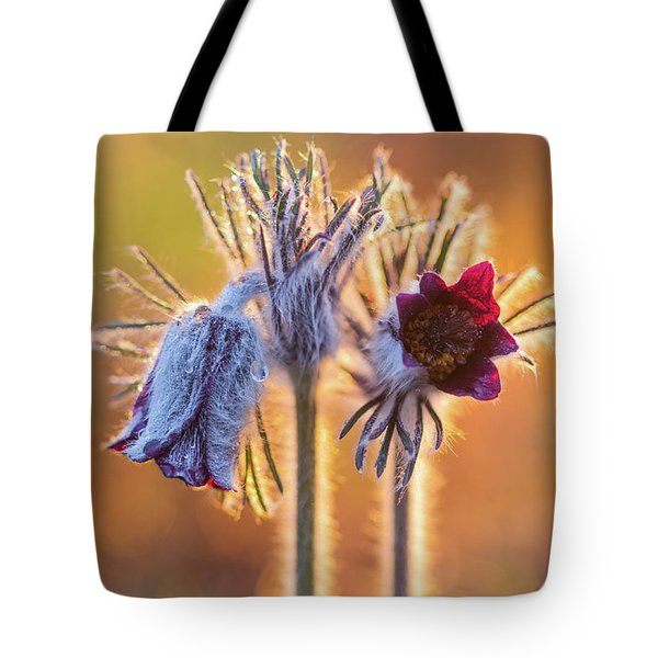 Tote Bag featuring the photograph Small Pasque Flower, Pulsatilla Pratensis Nigricans by Davor Zerjav
