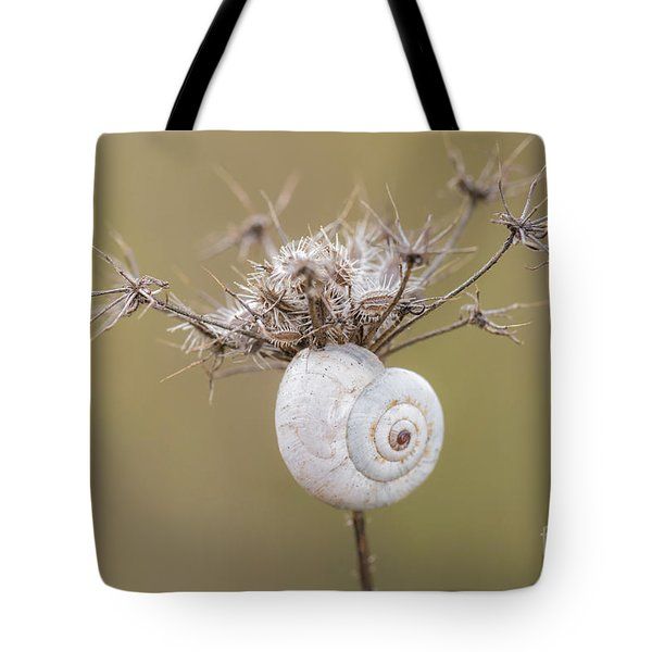 Small Snail Shell Hanging From Plant Tote Bag