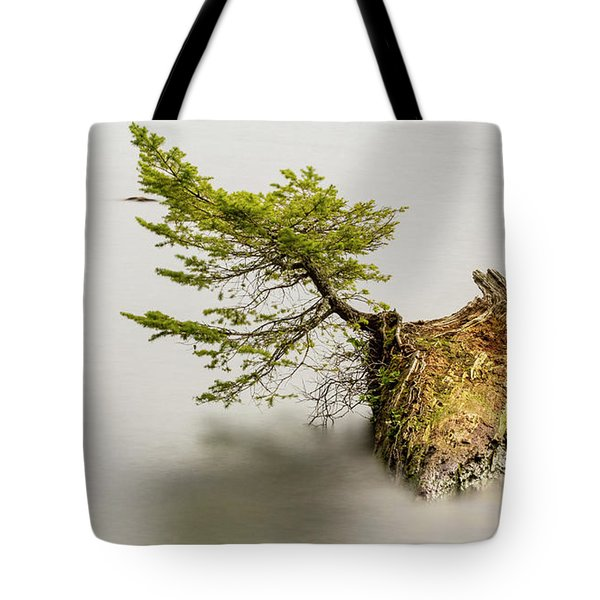 Small Tree On A Stump Tote Bag