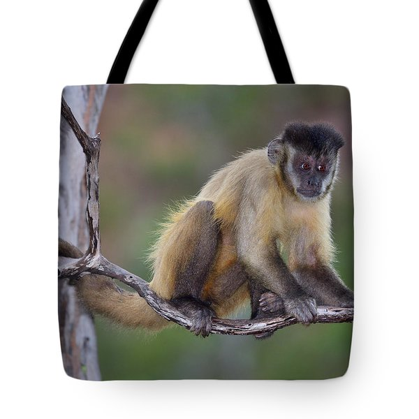 Tote Bag featuring the photograph Smarty Pants by Tony Beck