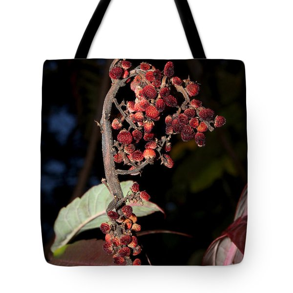 Smooth Sumac Flower Tote Bag by Robert Morin