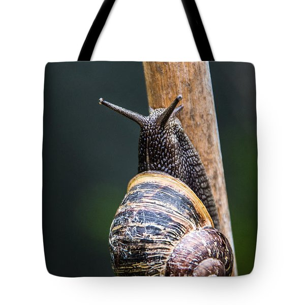 Snail Tote Bag by Martina Fagan