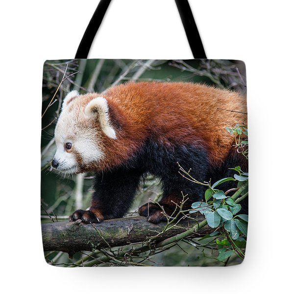 Sneaky Red Panda Tote Bag by Greg Nyquist