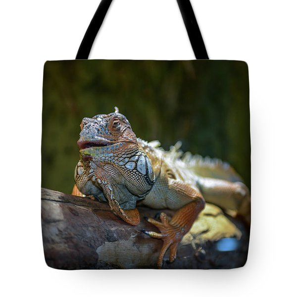 Snoozing Iguana Tote Bag by Martina Thompson