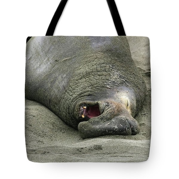 Tote Bag featuring the photograph Snoring Elephant Seal by Anthony Jones