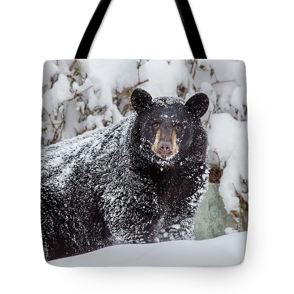 Snow Bear Stare Tote Bag