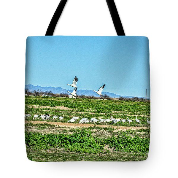 Snow Geese Feeding Tote Bag by Daniel Hebard
