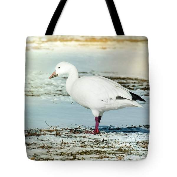 Tote Bag featuring the photograph Snow Goose - Frozen Field by Robert Frederick
