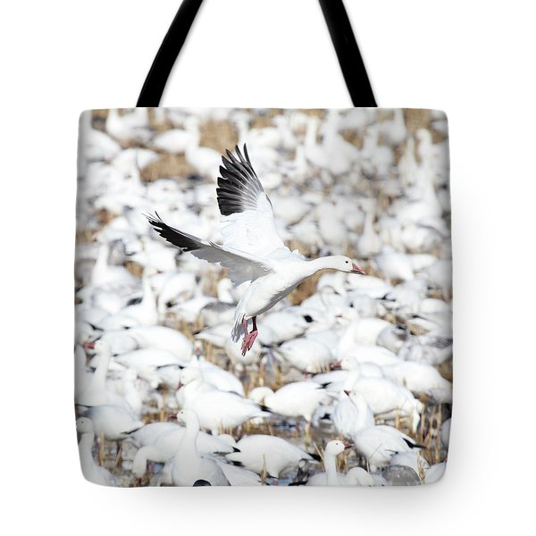Snow Goose Lift-off Tote Bag