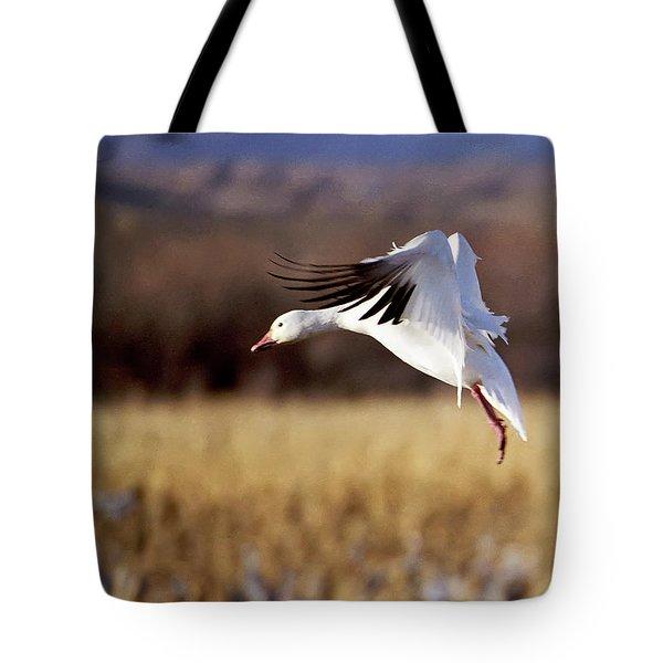 Snow Goose Tote Bag by Steven Ralser