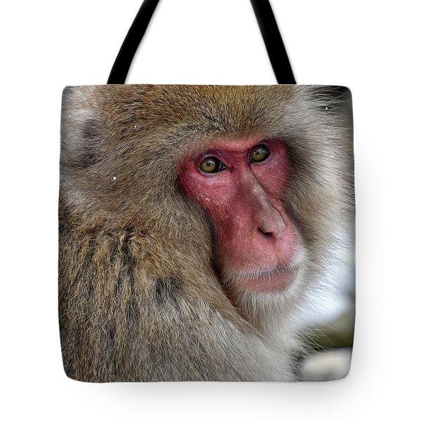 Snow Monkey Tote Bag