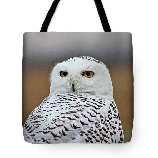 Snow Owl Strare Tote Bag
