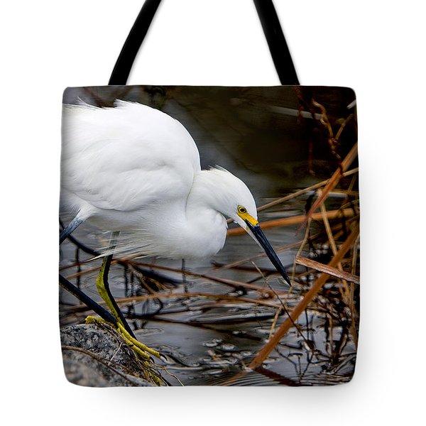 Snowy Egret Egretta Tote Bag