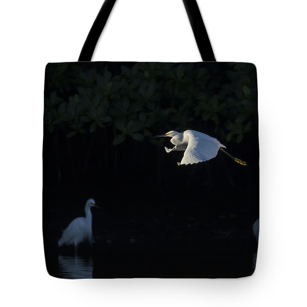 Snowy Egret Gliding In The Morning Light Tote Bag