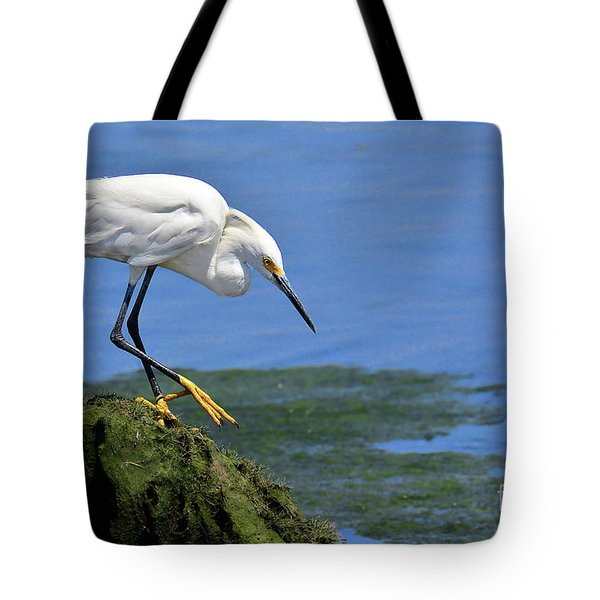 Snowy Egret Waiting For Brunch To Appear Tote Bag
