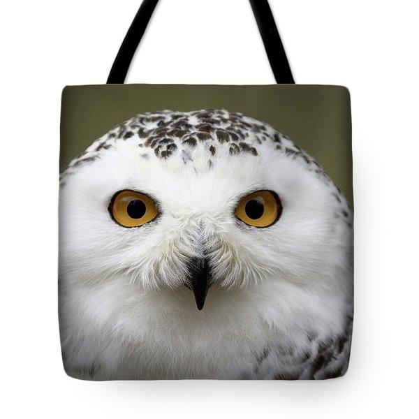 Snowy Eyes Tote Bag