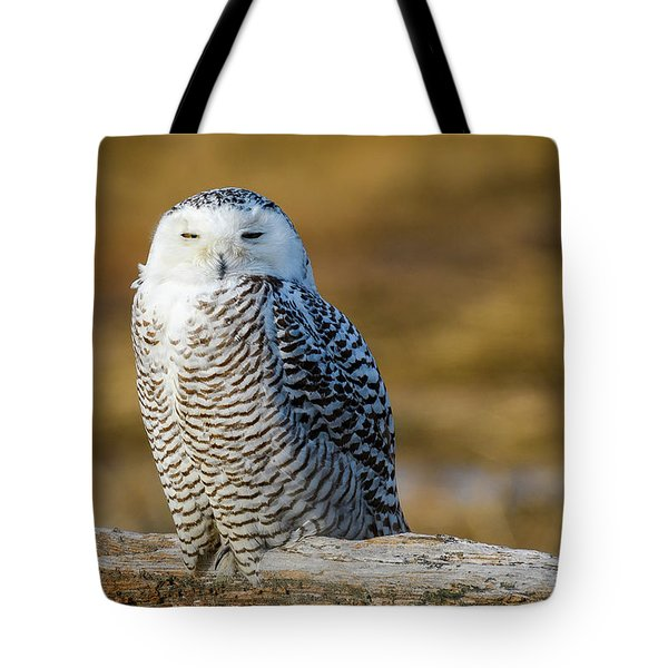 Tote Bag featuring the photograph Snowy On Log by Michael Hubley