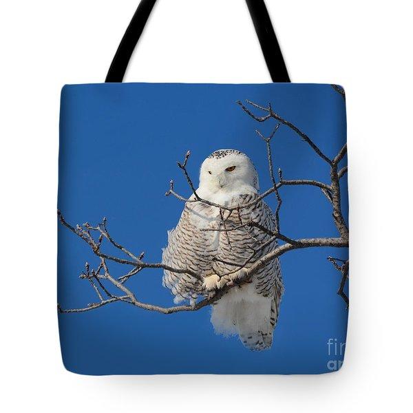 Snowy Owl 7 Tote Bag