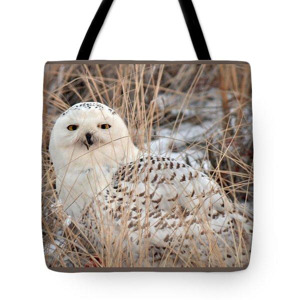 Snowy Owl Tote Bag by Nancy Landry