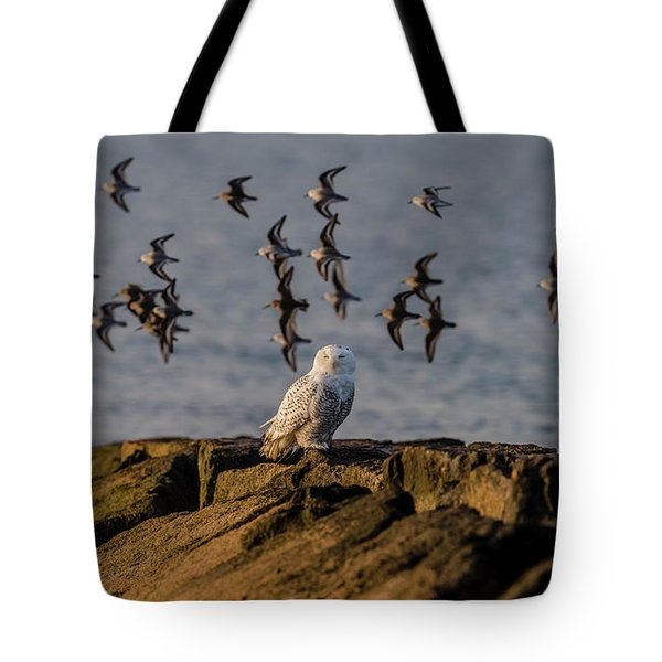 Snowy Owl On A Jetty Tote Bag