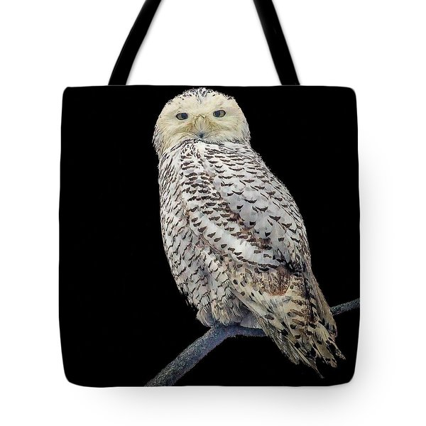 Snowy Owl On Black Tote Bag