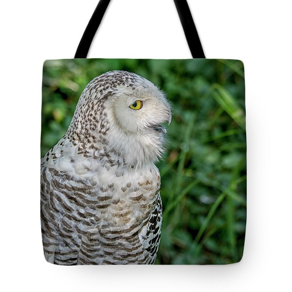 Tote Bag featuring the photograph Snowy Owl by Patricia Hofmeester