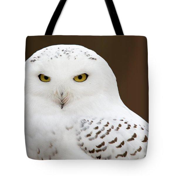 Snowy Owl Tote Bag by Steve Stuller