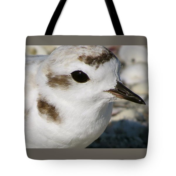 Snowy Plover Close Up Tote Bag