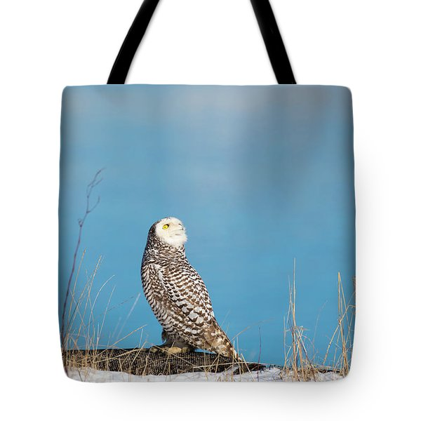 Tote Bag featuring the photograph Snowy Watching A Plane by Brian Hale