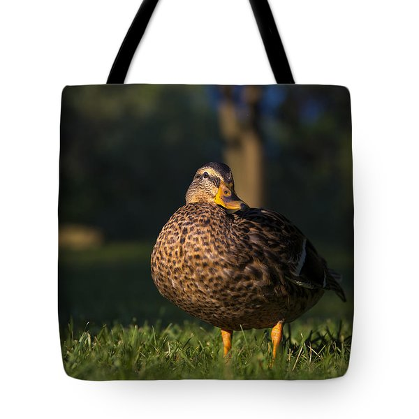 Tote Bag featuring the photograph Soak Up The Sun by Mark Papke