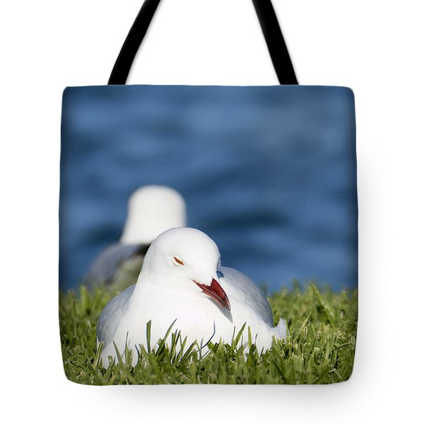 Tote Bag featuring the photograph Soaking Up The Sun 01 by Kevin Chippindall