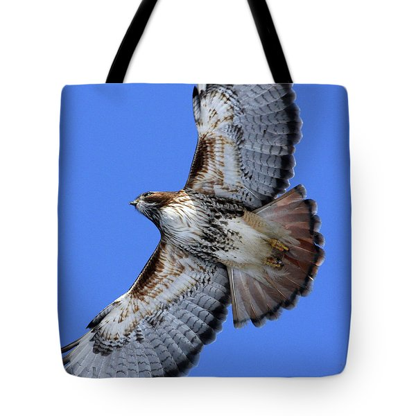 Soaring Red-tail Tote Bag
