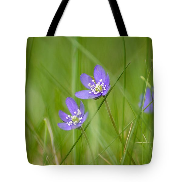 Tote Bag featuring the photograph Soft Blue Hepaticas by Kennerth and Birgitta Kullman